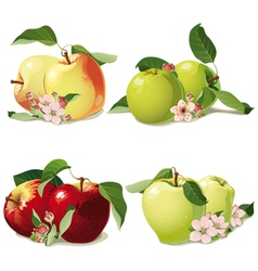 set of ripe apples vector image