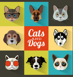 Dogs and cats portraits with flat design vector