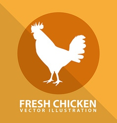 fresh chicken vector image
