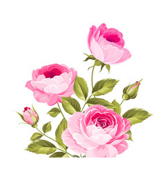 Pink beautiful rose vector