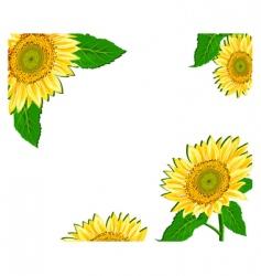 sunflower framework vector image