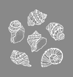 White graphic seashell set on gray background vector