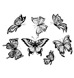 Beautiful butterflies vector image vector image