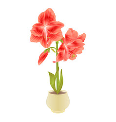 Elegant blooming amaryllis red flowers and bud vector