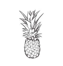 Hand drawn pineapple fruit vector image