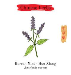 Medicinal herbs of china korean mint vector