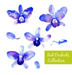 Collection of blue watercolor orchids vector image vector image