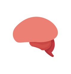 brain human healthy memory mind icon vector image