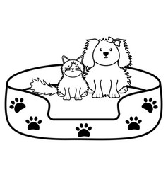 cute little cat and dog in bed vector image