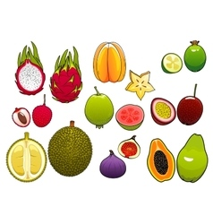 Whole and halved fresh tropical fruits vector image