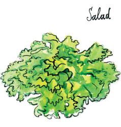 watercolor salad vector image