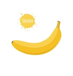 Banana fruit isolated on white background vector image