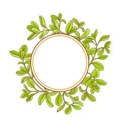 marjoram branch frame vector image