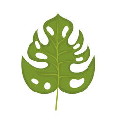 philodendron leaf vector image