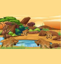 Scene with hyenas pond vector