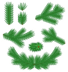 fir tree branches vector image