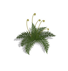 Plant in isometric style cartoon tropical fern vector