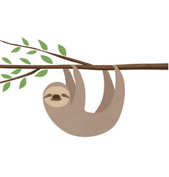 sloth vector image