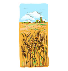 Watercolor field of wheat barley or rye vector