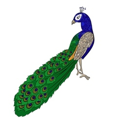 Hand drawing peacock vector image vector image