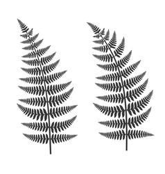 fern leaf set vector image