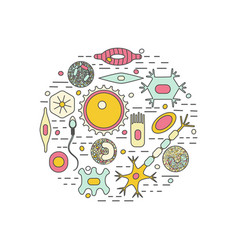 different human cell types vector image