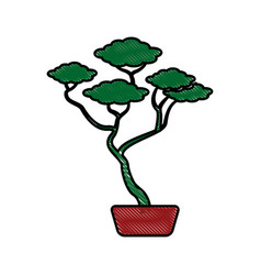Drawing bonsai tree ceramic pot botanical vector