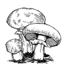 Mushrooms engraving vector