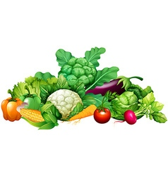 Different kind of vegetables vector image vector image
