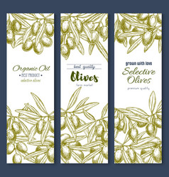 olive branches or olives product banners vector image vector image