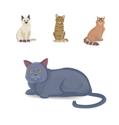 collection cats of different breeds vector image vector image
