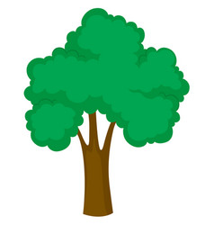 Big tree on white background vector