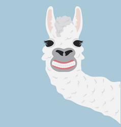 happy llama smile vector image