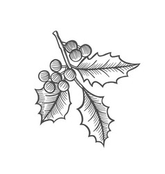 Sketch of mistletoe branch vector
