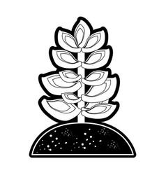 Succulent in soil vector