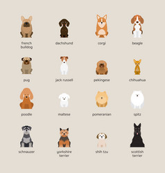 Dog breeds set small and medium size vector