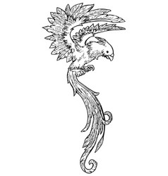 Long tail bird vector