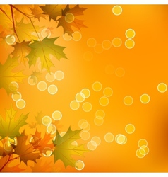 Maple Leaves of Autumn vector image