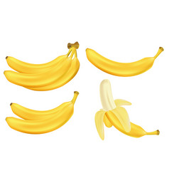realistic set bananas isolated on white vector image