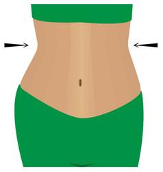 Slimmimg female belly vector