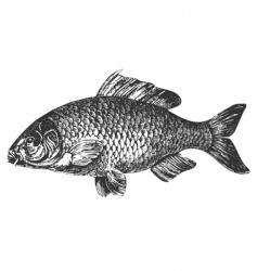 carp fish antique illustration vector image vector image