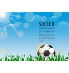 Soccer ball on grass vector image