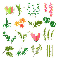Beautiful jungle leaves and flowers vector