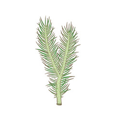 christmas tree branch hand drawn holiday plant vector image