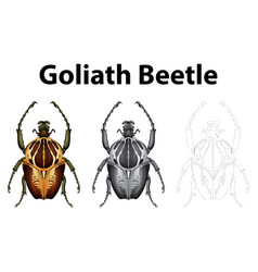 Doodle character for goliath beetle vector