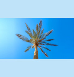 Palm tree on blue sky background bottom view vector