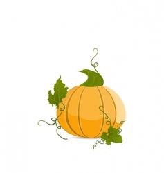 pumpkin vegetable vector image
