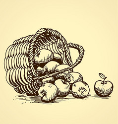 vintage apples tipped out basket vector image