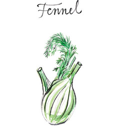 watercolor fennel vector image vector image