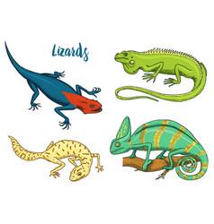 chameleon lizard american green iguana reptiles vector image